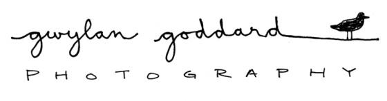 gwylan-logo-draft1